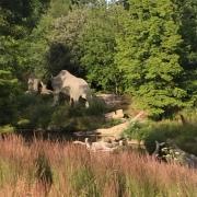 Crysral palace dinosaurs