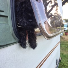 Puppy escaping from Bedford Bambi campervan