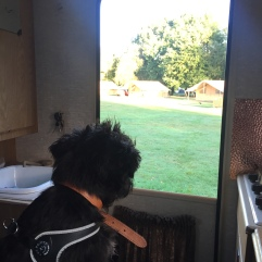 Rear door view, bambi campervan at Hertford Camping and Caravanning Club site