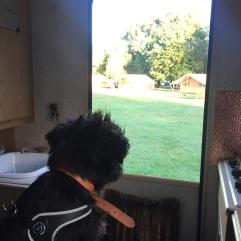 Rear door view, bambi campervan at Hertford Camping and Caravanning Club site