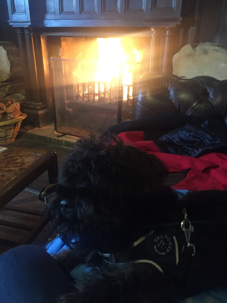 Dog relaxing on sofa by log fire