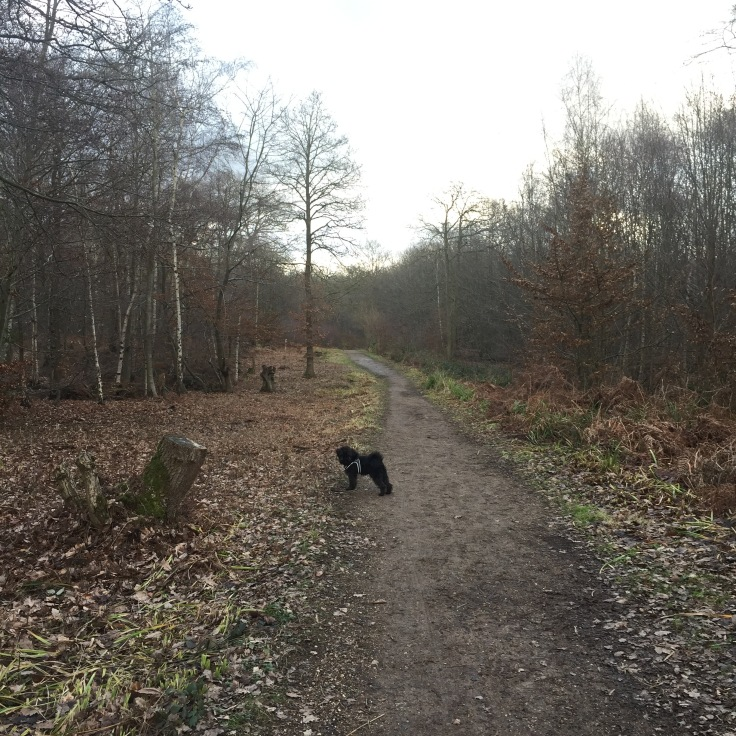 Walk in the woods at Broxbourne